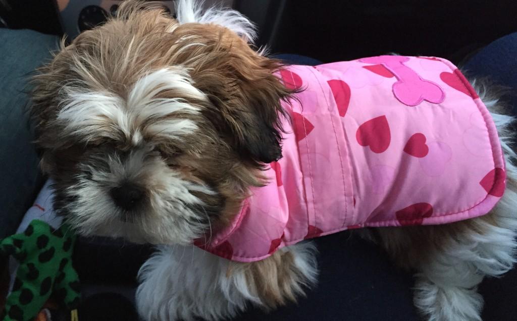 Bella Valentines Day Coat | Dana Renee Style